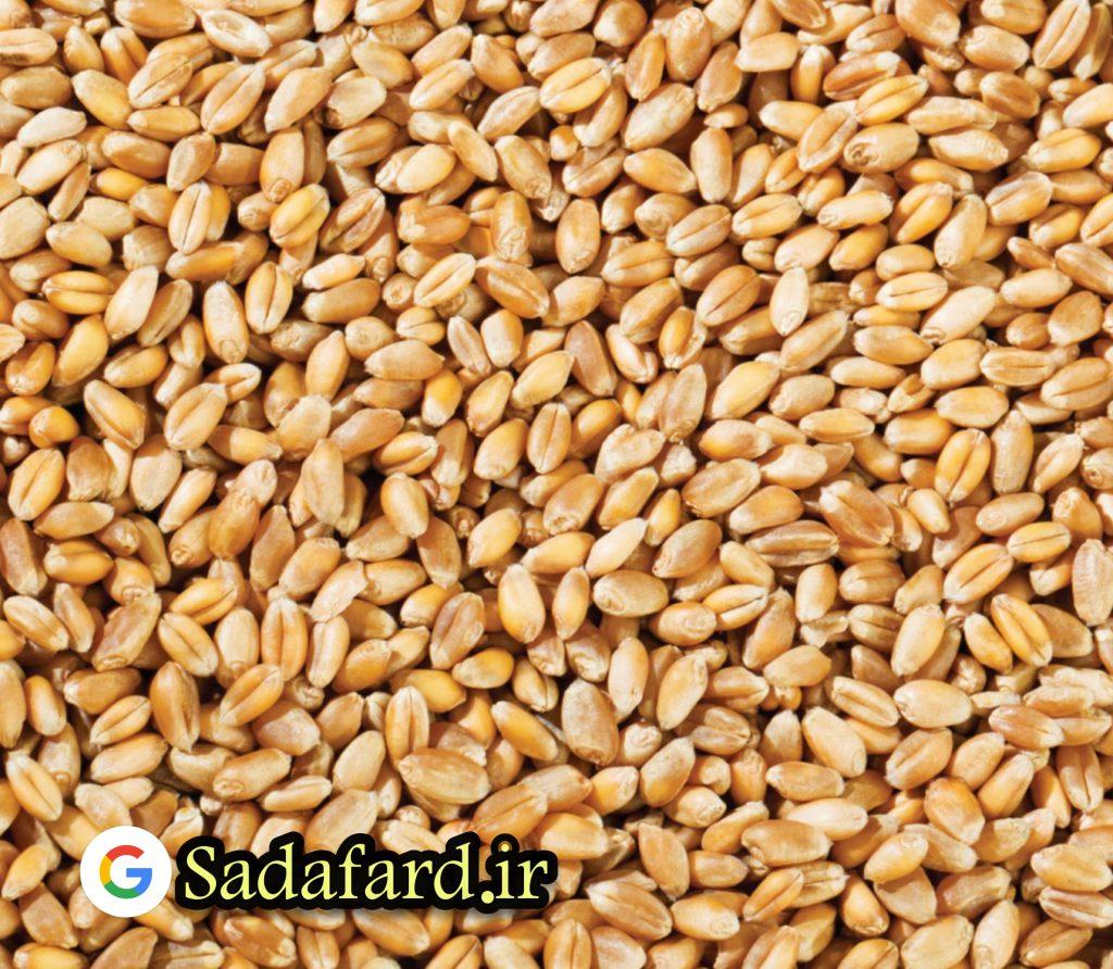 گندم کامل منبع خوبی از چندین ویتامین و مواد معدنی است. همانند اکثر دانه های غلات ، میزان مواد معدنی، به خاکی که در آن رشد کرده بستگی دارد.