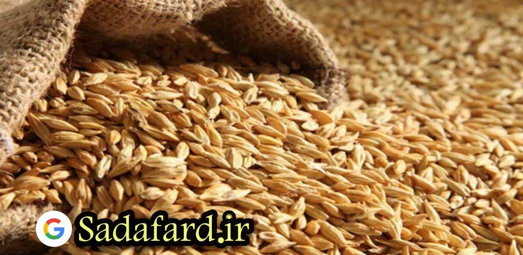 دانه های جو سرشار از ویتامین C، آنتی اکسیدان ها و مواد معدنی هستند. این دانه ها برای سلامت پوست بسیار مفید هستند.