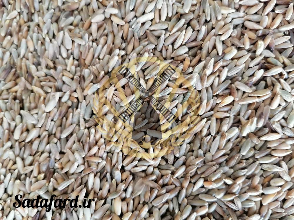 دانه چاودار چیست؟ و چه فرقی با گندم دارد؟