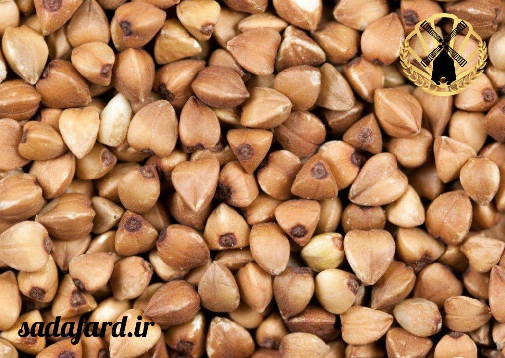 دانه گندم سیاه چیست